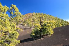 Free Teneriffe - Teide Royalty Free Stock Photo - 1950055
