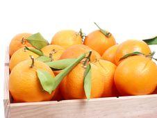 Free Oranges Royalty Free Stock Photos - 1950708