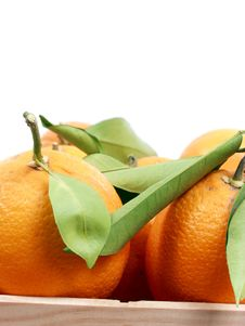 Free Oranges Royalty Free Stock Photo - 1950725