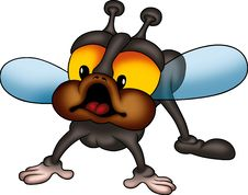 Free Little Fly 04 Royalty Free Stock Images - 1954529