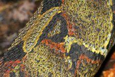 Free Snake Skin Stock Image - 1955661