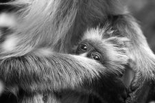 Free Monkey Infant Stock Photo - 1955730