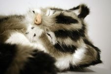 Free Sleeping Toy-cat Stock Images - 1957264