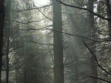Free Tree Stock Image - 1957351