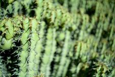 Free CACTUS GARDEN Royalty Free Stock Photos - 1958568