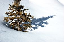 Free Pine Snow Stock Photo - 1958800