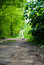 Free Summer Forest An Country Road Stock Photo - 19501020