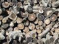 Free Firewood. Stock Photo - 19504130