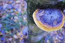 Mushroom On A Tree Trunk Royalty Free Stock Images