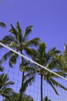 Free Palm Trees And Volleyball Net Stock Image - 19502441