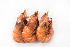 Free Cooked Prawn Stock Images - 19503364