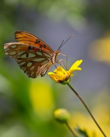 Monarch Butterfly On A Colorful Yellow Sunflow