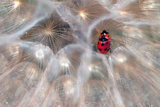 Ladybirds Royalty Free Stock Photography