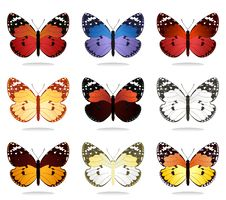Free Collection Of The Butterflies4 Stock Image - 19505421