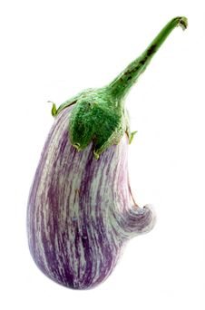 Free Aubergine Royalty Free Stock Photo - 19506485