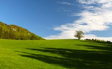 Free Alone Tree On The Green Meadow Stock Photos - 19506733