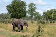 Free Elephant Royalty Free Stock Photo - 19508045