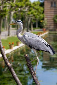 Free Heron Stock Image - 19508321