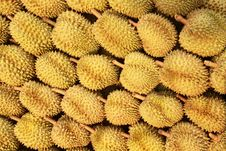 Free Durian , King Of Fruit Stock Photography - 19509602