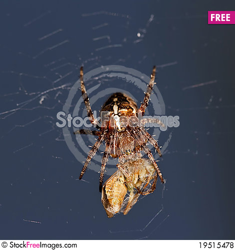 Spider and his victim Stock Photo