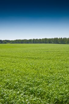 Free Green Grass Under Blue Bright Sky Stock Images - 19511184