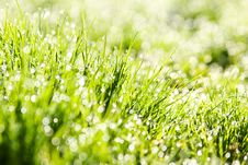 Free The Dew In Fresh Grass Stock Photos - 19512543