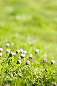 Free The Dew In Fresh Grass Royalty Free Stock Photos - 19512558