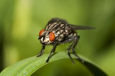 Free Fly Macro. Royalty Free Stock Photography - 19512937