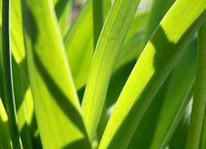 Free Lawn Grasses Royalty Free Stock Photo - 19513095