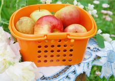 Free Red Apples In The Orange Basket, Rural Still-life Stock Image - 19514721