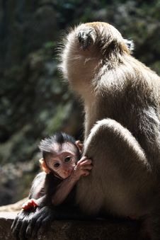 Free Cute Baby Monkey Royalty Free Stock Photos - 19515578