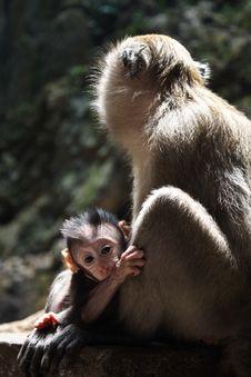 Cute Baby Monkey Royalty Free Stock Photos