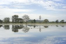 Free Landscape Of Sri Lanka Royalty Free Stock Photos - 19517048