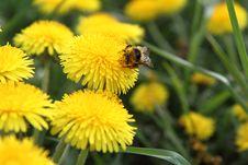 Free Bumblebee Stock Photo - 19517900