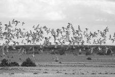 Free Flying Birds Stock Photos - 19518063