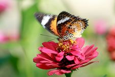 Free Butterfly Royalty Free Stock Photography - 19519457