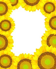 Free Frame With Sunflowers. Stock Photos - 19519623