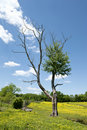 Free Tree In Horse Pasture Royalty Free Stock Photo - 19528005