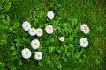 Free Daisy Flowers Stock Photography - 19528312