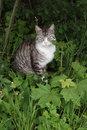 Free Grey Cat Royalty Free Stock Photo - 19528375