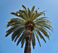 Free Top Of Palm Tree Royalty Free Stock Photo - 19529285