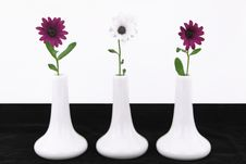 Free Daisy Flowers Royalty Free Stock Photos - 19521738