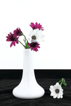 Free Daisy Flowers Royalty Free Stock Images - 19521749