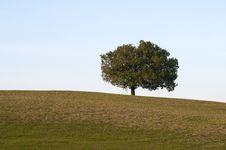 Free Lonely Tree Stock Photos - 19521873