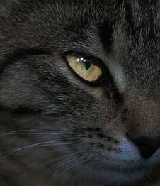 Free Cat Eye Stock Image - 19523101