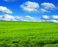 Free Green Field Royalty Free Stock Photos - 19523368