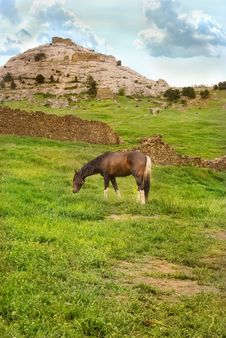 Free Grazing Horse Stock Image - 19524131