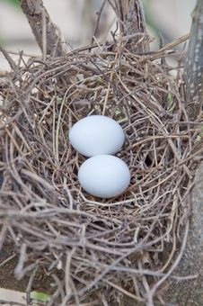 Free Bird Net And Egg Stock Images - 19525474