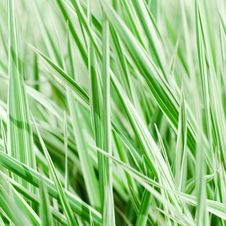 Free The Fresh Green Grass Royalty Free Stock Photography - 19527287