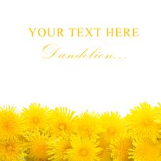 Free Yellow Dandelion Isolated On A White Royalty Free Stock Photography - 19527557